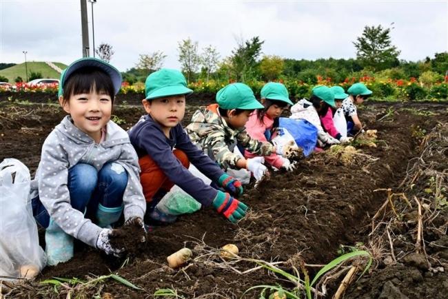 サラダ館学童農園で収穫