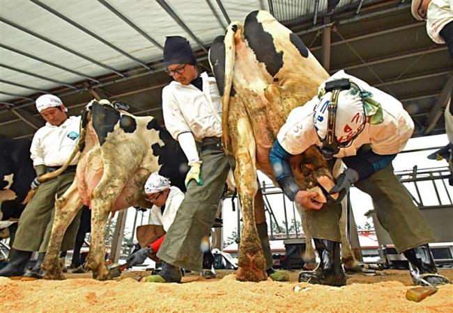 畜大で削蹄全道大会 31人が技競う