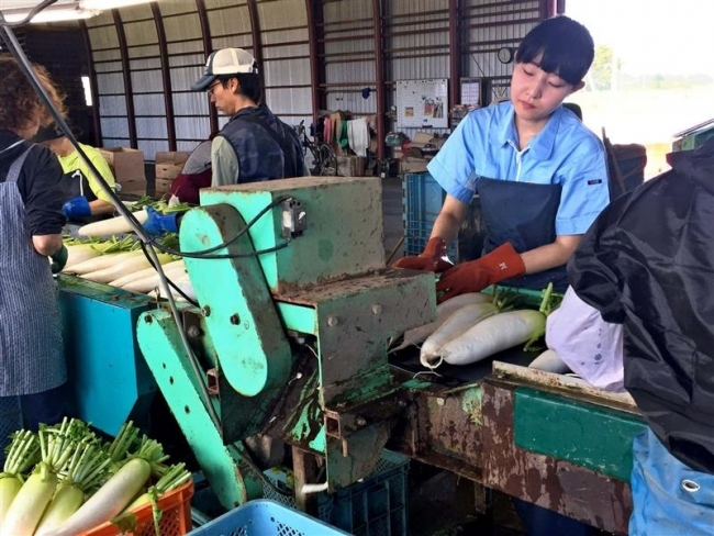 若手芸術家が農業就労体験 大樹