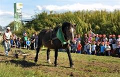 啓西小児童が馬耕を見学 帯広競馬場で馬文化を支える会
