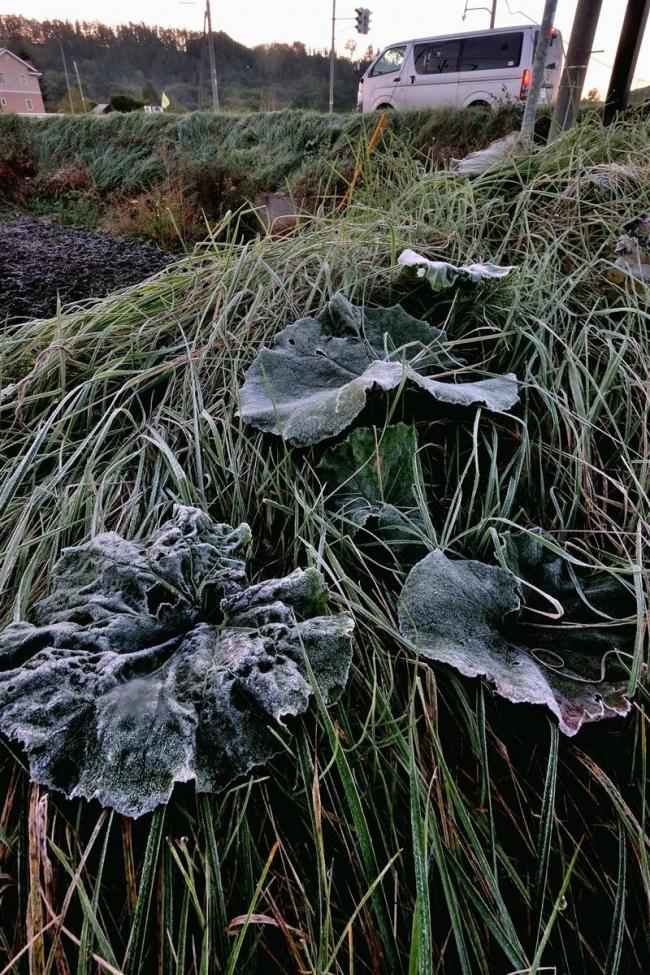 帯広で初霜、初氷