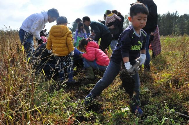 少年院の農場 園児が収穫体験
