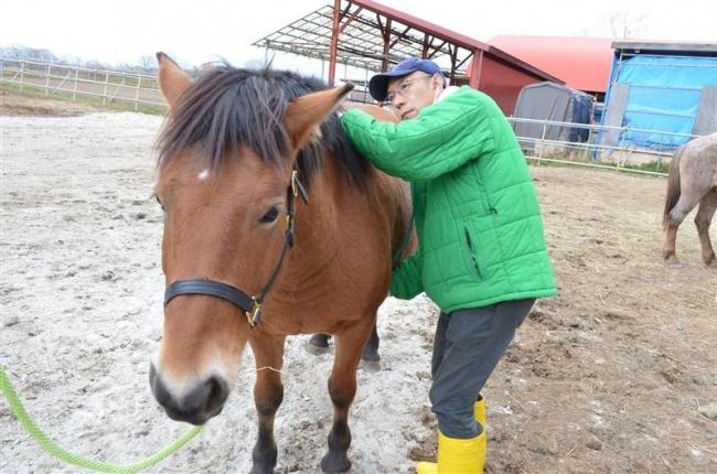 人工授精で馬生産 帯畜大の南保教授