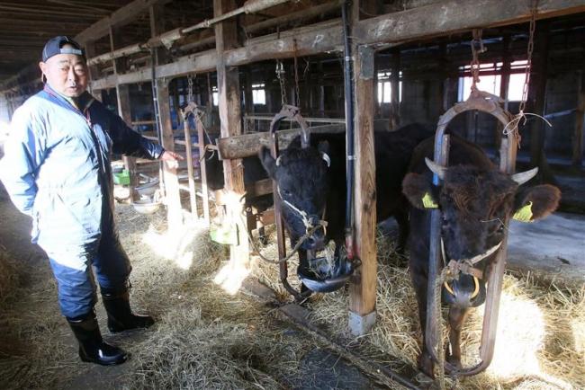 幻の和牛「竹の谷蔓牛」を導入 幕別の法人