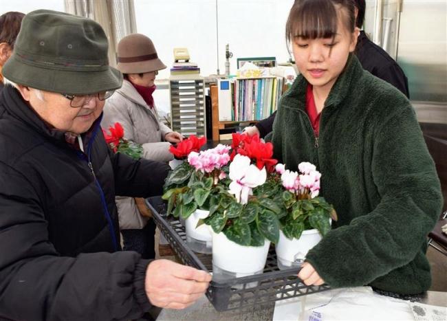 色とりどりの鉢花を販売 音更高校