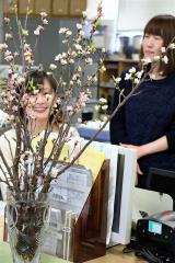 役場の「冬の桜」開花 新得