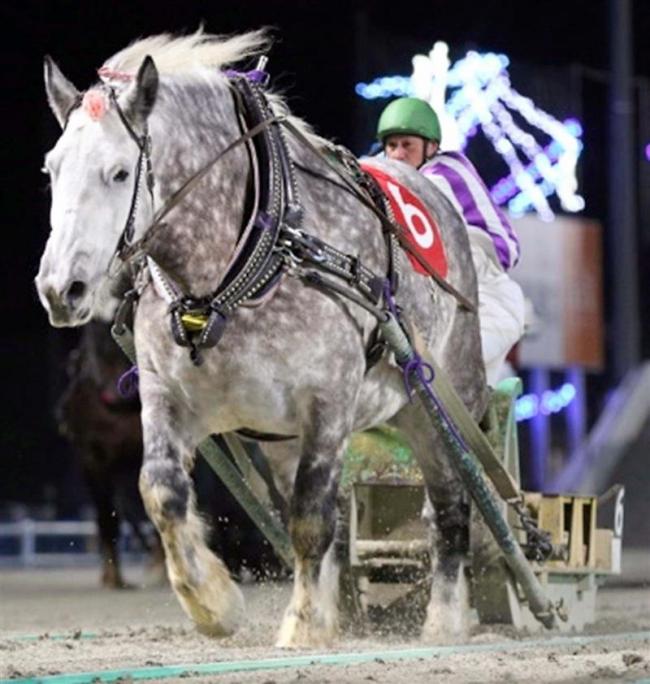 人気牝馬のキサラキク引退、17日にセレモニー ばんえい十勝