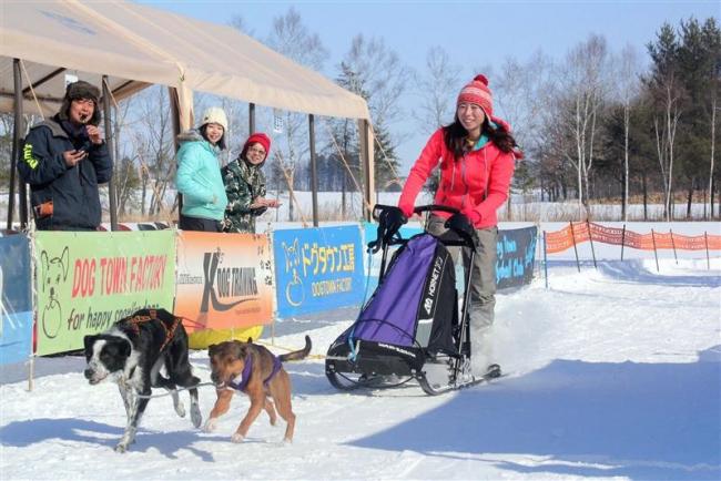 犬まっしぐら、冬の「運動会」 中札内