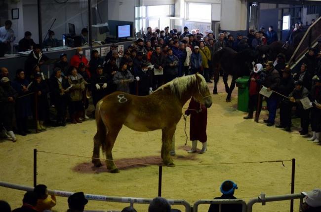 平均99万円 馬の初競り