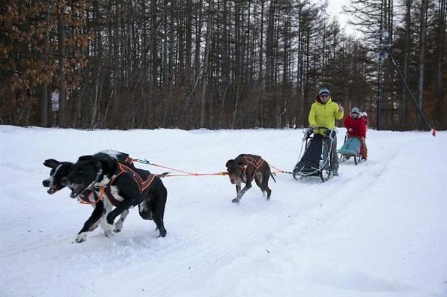 犬ぞり体験人気 次シーズンも 中札内