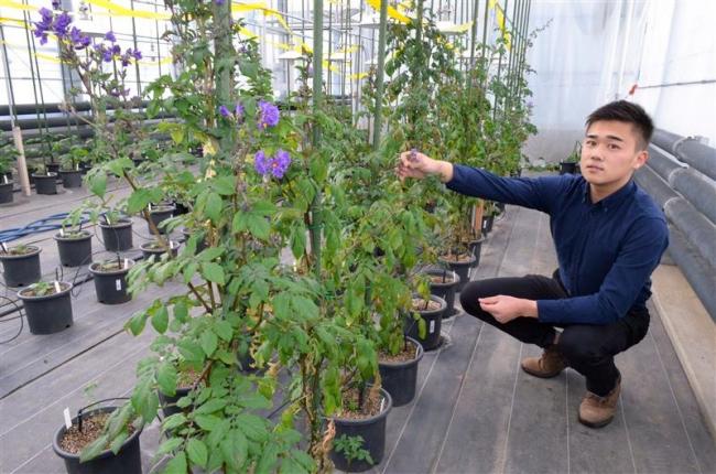 ジャガイモを種子から栽培 帯畜大大学院の梨木さんが米国で研究へ