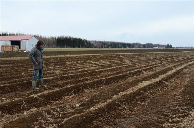 少雪による畑凍結でナガイモ腐敗 帯広