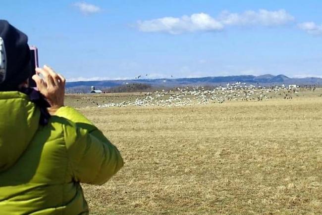 重要湿地で渡り鳥観察 浦幌