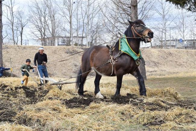 伝統技術を体験 ますや麦音で「馬耕」