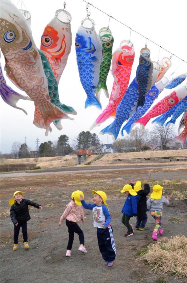 大樹・歴舟川で236匹こいのぼり泳ぐ
