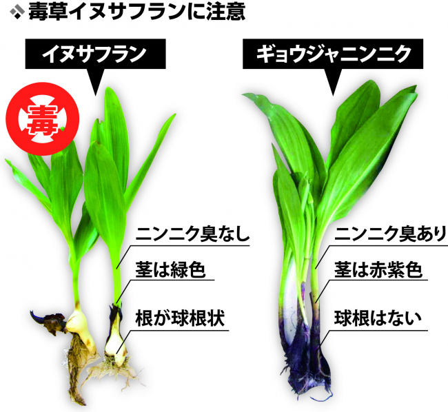 「採らない、食べない、人にあげない」 有毒植物の誤食を注意喚起 帯広保健所