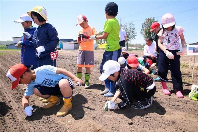 ひまわり迷路の種植えに挑戦 本別中央小3年生