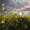 球体のパレット~作品紹介(3)「からし色の草地」