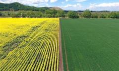 旬景~SORA PHOTO「黄色と緑のコントラスト美しく 満開のナタネと小麦が競演」