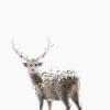 球体のパレット~作品紹介(5)「PixCell-Deer #51」