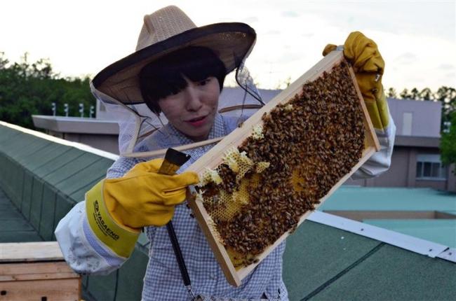畜大屋上で養蜂開始 魅力発信へ蜂蜜販売や商品開発