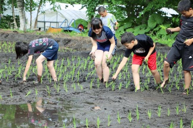 新得小児童が田植えに挑戦