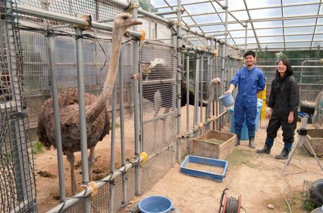 第1弾は「ダチョウ」 飼育施設拡張に支援を 帯畜大がCF開始