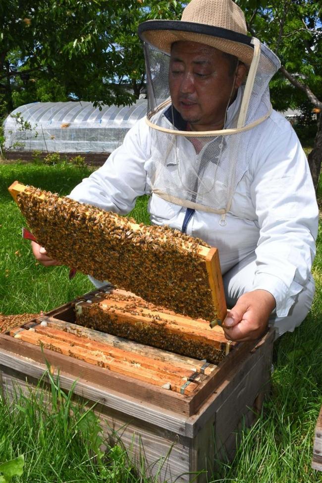 ハチ屋さんを追う(2)「『これで食ってく』覚悟決めた」