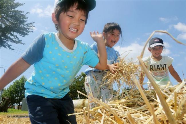 日本一の小麦に歓声 音更・麦感祭