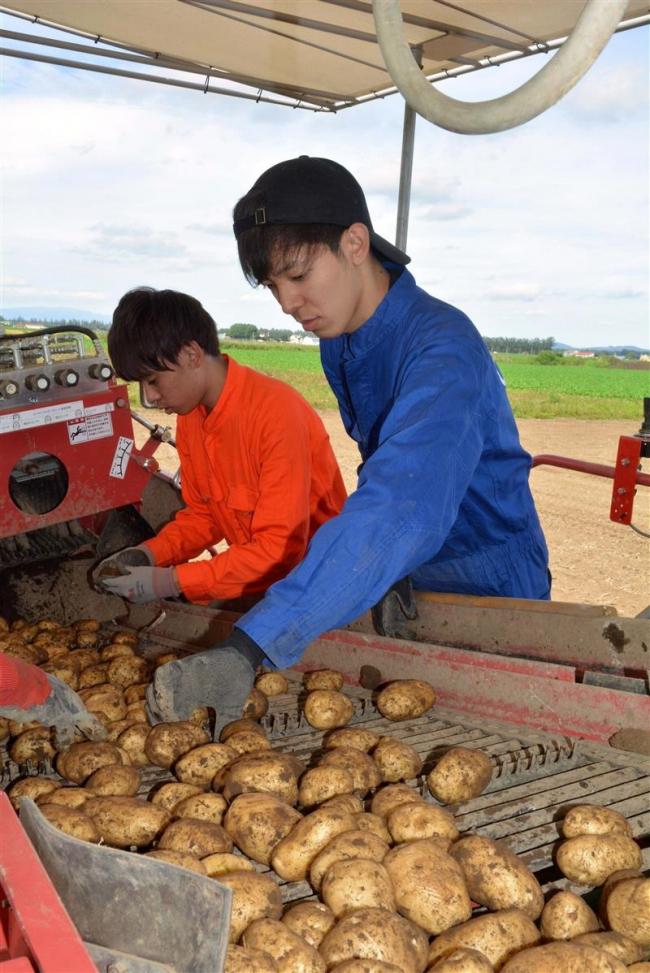 関西の大学生が農業インターン 士幌