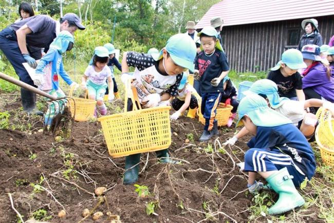 大樹で園児がジャガイモ掘り