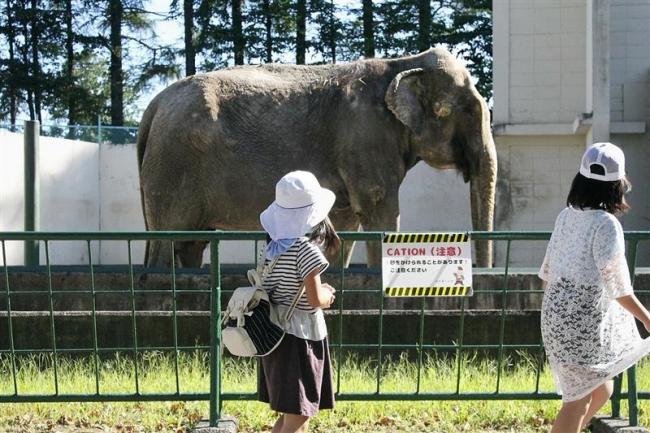 長寿ゾウ「ナナ」ずっと元気で おびひろ動物園