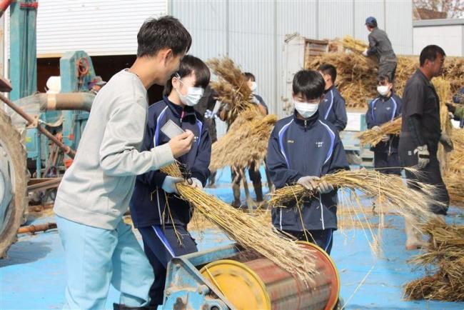 上浦中生徒らが小麦の脱穀に挑戦 浦幌