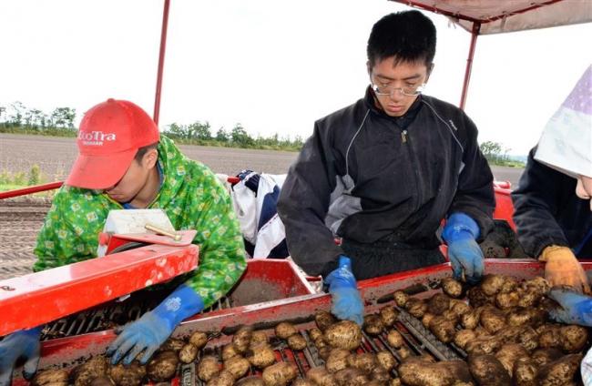 北大生が豊頃で農業体験