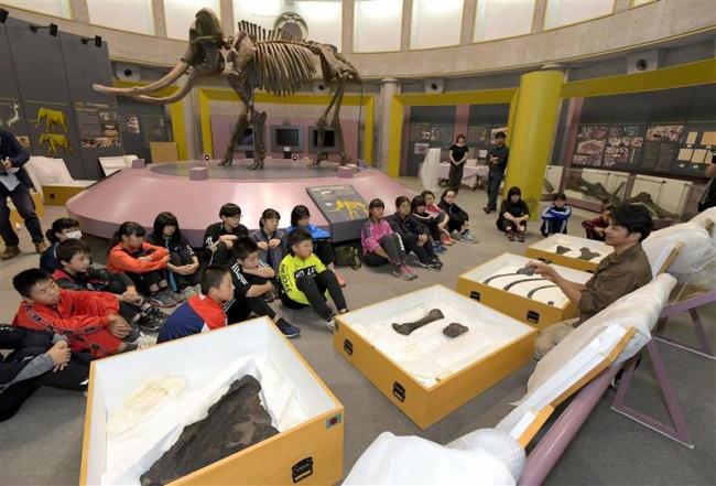 ナウマン化石の展示作業体験 忠類の児童生徒