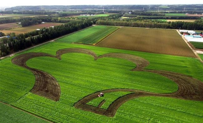 GPS自動操舵で畑アート 際立つ茶と緑のコントラスト 音更