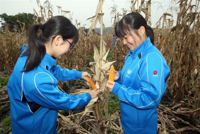 本別高生がトウモロコシ収穫体験