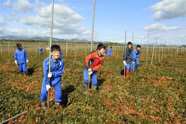 上士幌中生が農作業体験