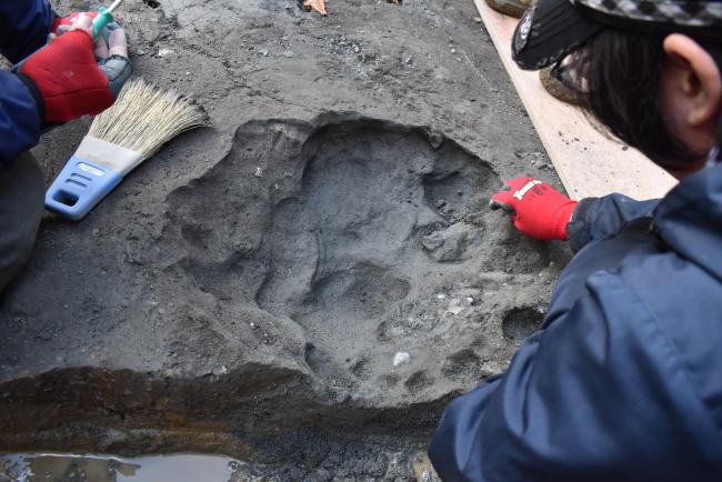 ナウマンゾウの足跡の可能性 発掘現場で新たな荷重痕発見