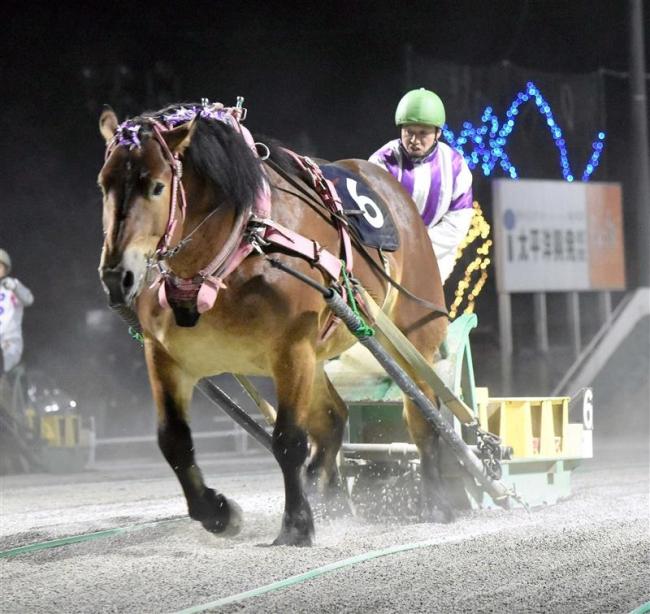 ばんえい菊花賞も快走、世代最強馬のメムロボブサップ2冠達成