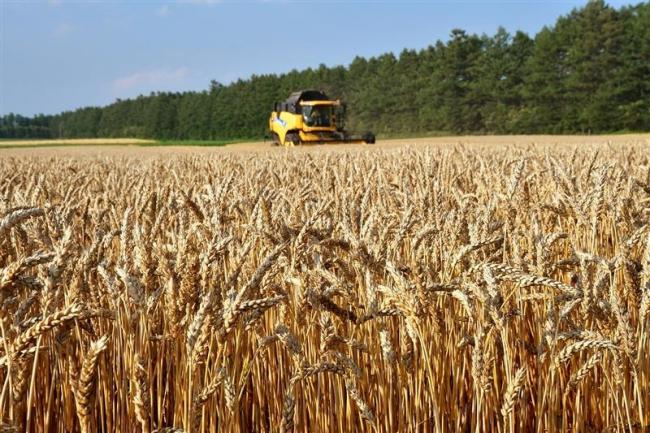 今年産の十勝小麦、2年ぶりに20万トン台 ホクレン取り扱い分