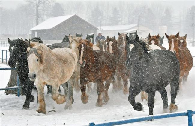 寒空の下、妊娠馬が疾走 十勝牧場