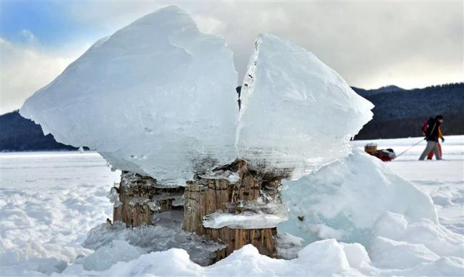 季節の風物詩、今年も「キノコ氷」 上士幌町・糠平湖