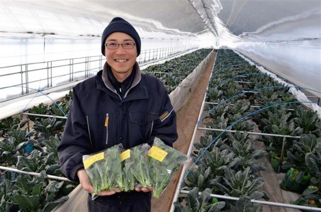 新野菜「アレッタ」栽培し初出荷 大樹の伊藤さん