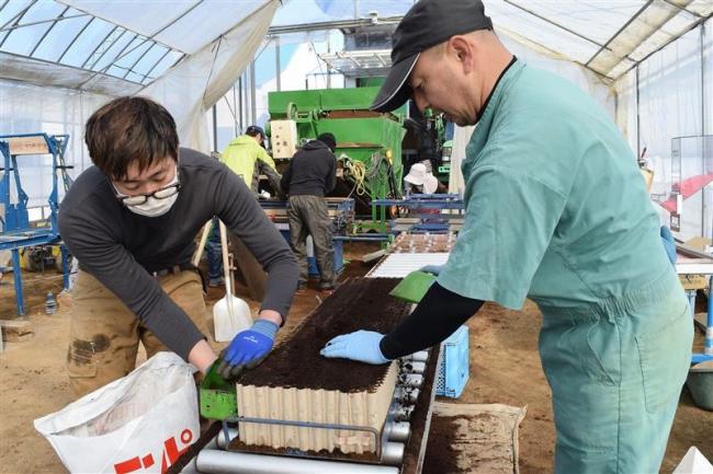 農作業のトップを切ってビートの苗作り 中札内