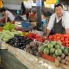 有機農業を世界に~キルギス事業報告(中)「市場調査通じ販路開拓」