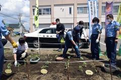 花壇にひまわりの苗を移植する署員ら