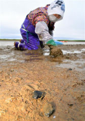 シジミ漁をする漁業者(15日午前5時40分ごろ、大樹町生花苗沼で。金野和彦撮影)