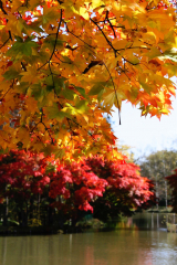 「遠景近景」 清水公園の紅葉 2