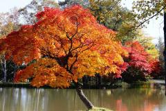 「遠景近景」 清水公園の紅葉 3